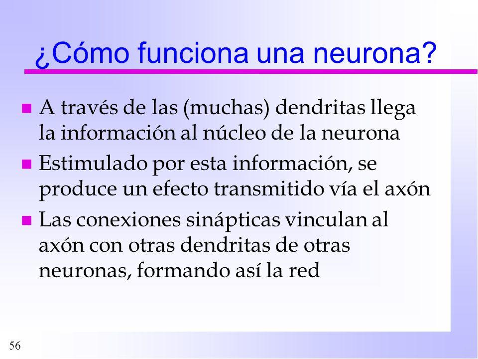 ¿Cómo funciona una neurona