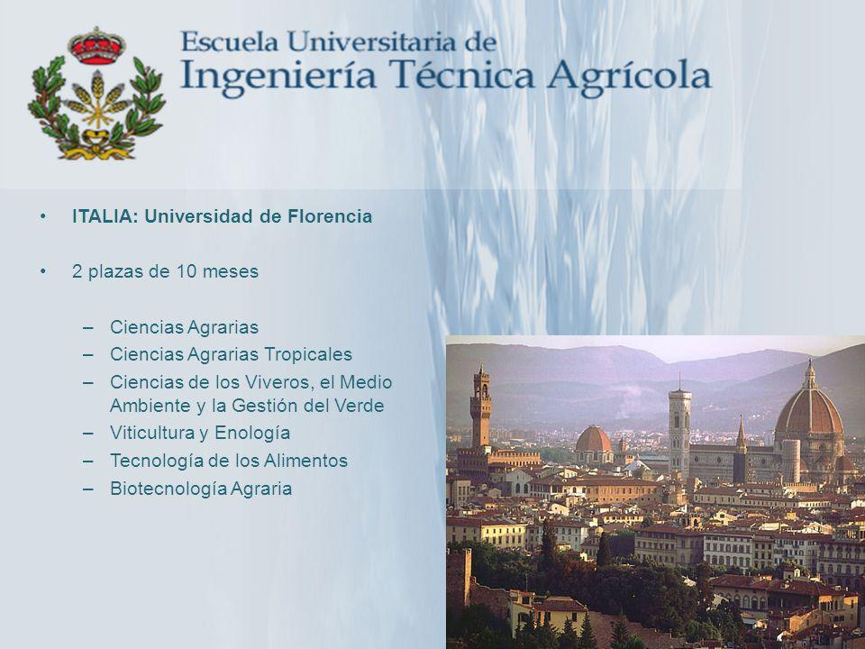 ITALIA: Universidad de Florencia
