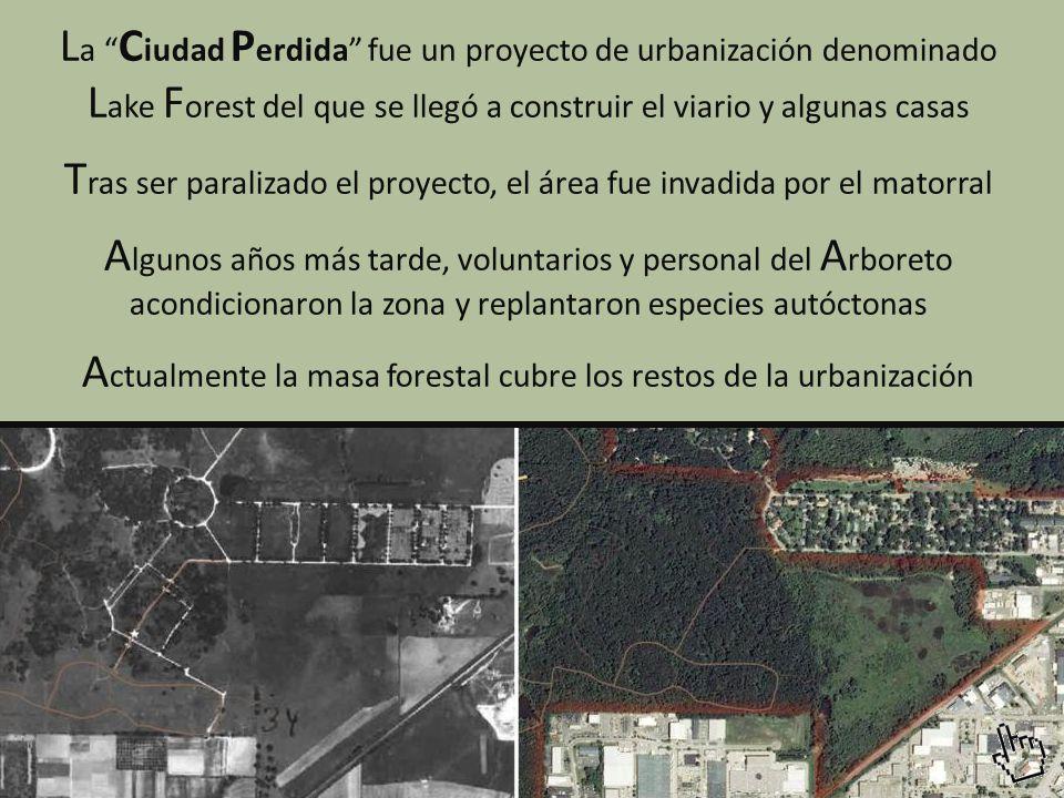 Tras ser paralizado el proyecto, el área fue invadida por el matorral