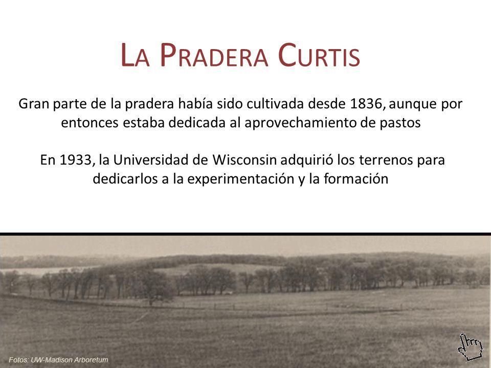 LA PRADERA CURTIS Gran parte de la pradera había sido cultivada desde 1836, aunque por entonces estaba dedicada al aprovechamiento de pastos.
