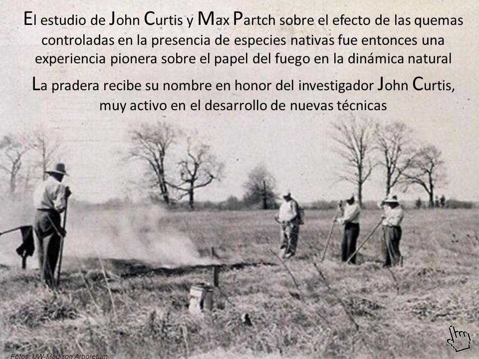 El estudio de John Curtis y Max Partch sobre el efecto de las quemas controladas en la presencia de especies nativas fue entonces una experiencia pionera sobre el papel del fuego en la dinámica natural