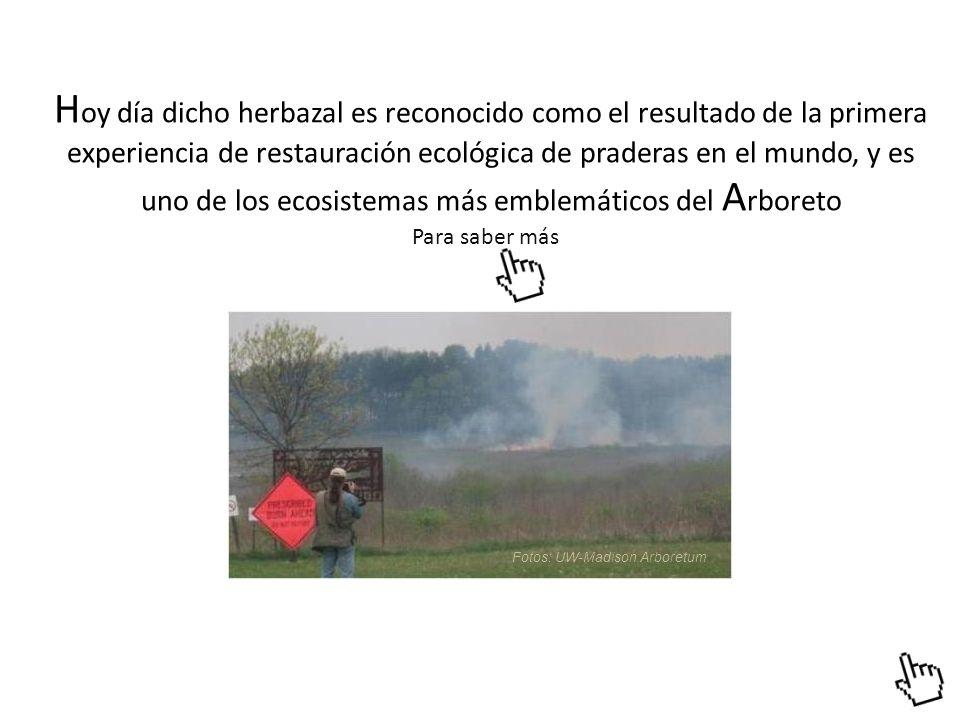 Hoy día dicho herbazal es reconocido como el resultado de la primera experiencia de restauración ecológica de praderas en el mundo, y es uno de los ecosistemas más emblemáticos del Arboreto