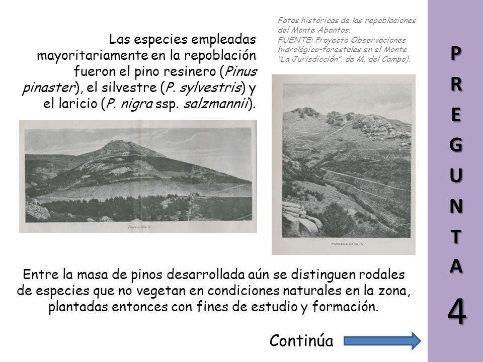 Fotos históricas de las repoblaciones del Monte Abantos.