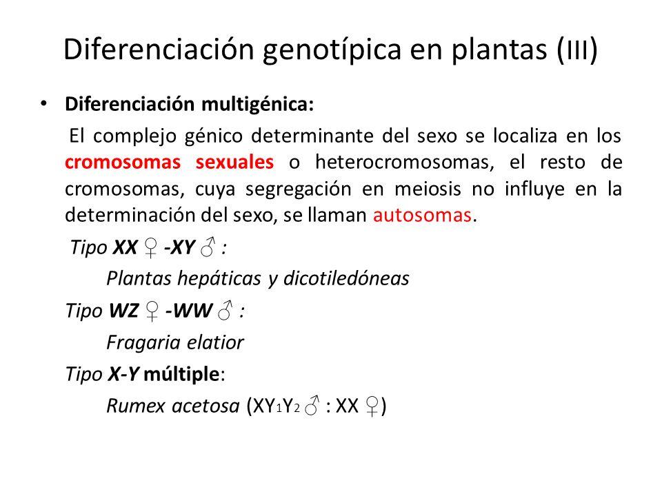Diferenciación genotípica en plantas (III)