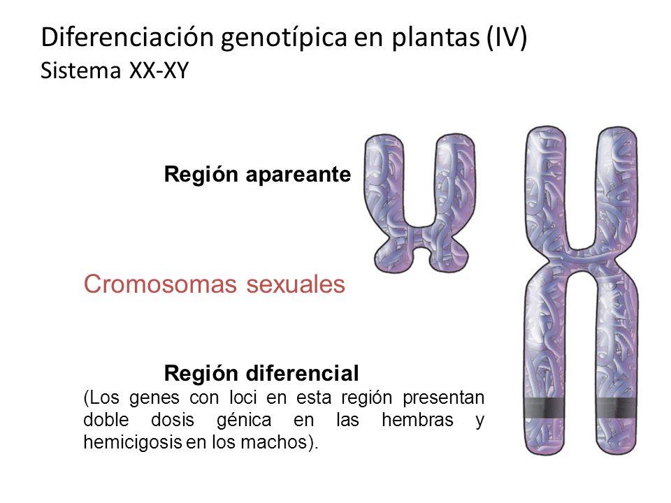 Diferenciación genotípica en plantas (IV) Sistema XX-XY