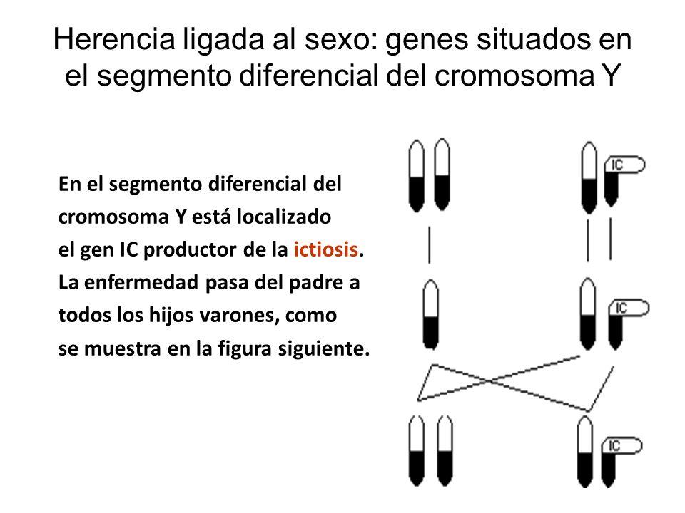 Herencia ligada al sexo: genes situados en el segmento diferencial del cromosoma Y