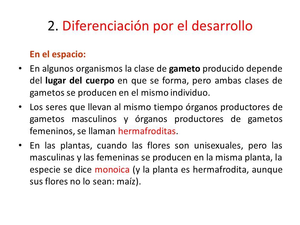 2. Diferenciación por el desarrollo