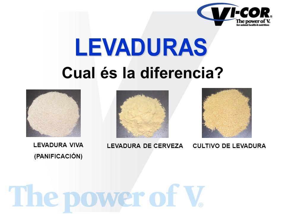 Cual és la diferencia LEVADURAS LEVADURA VIVA (PANIFICACIÓN)
