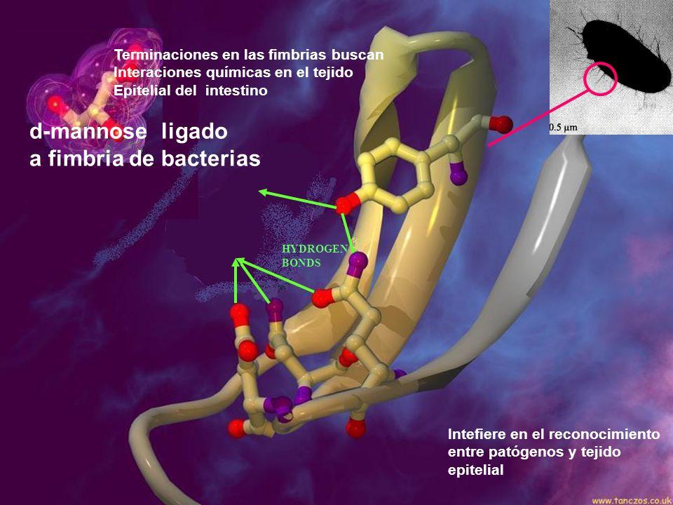 d-mannose ligado a fimbria de bacterias