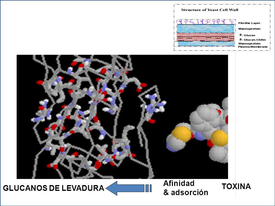 Afinidad TOXINA GLUCANOS DE LEVADURA & adsorción