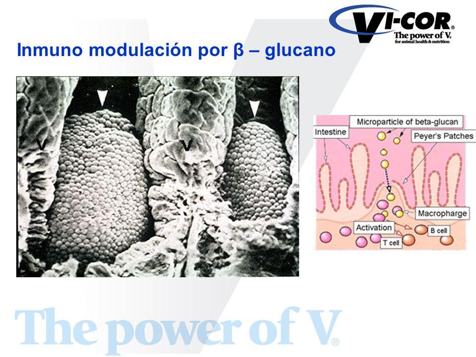Inmuno modulación por β – glucano
