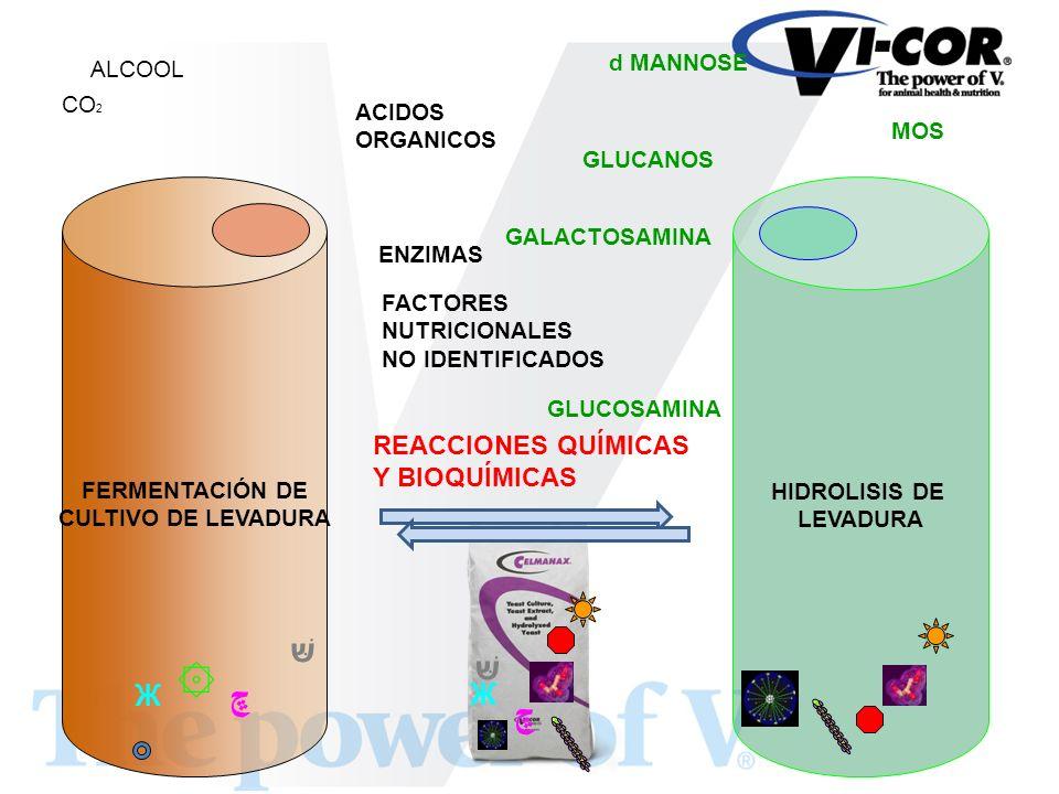 שּׁ שּׁ ۞ ڇ ڇ Ж Ж REACCIONES QUÍMICAS Y BIOQUÍMICAS d MANNOSE ALCOOL CO2