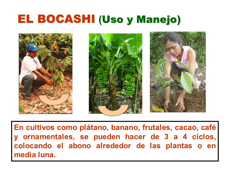 EL BOCASHI (Uso y Manejo)
