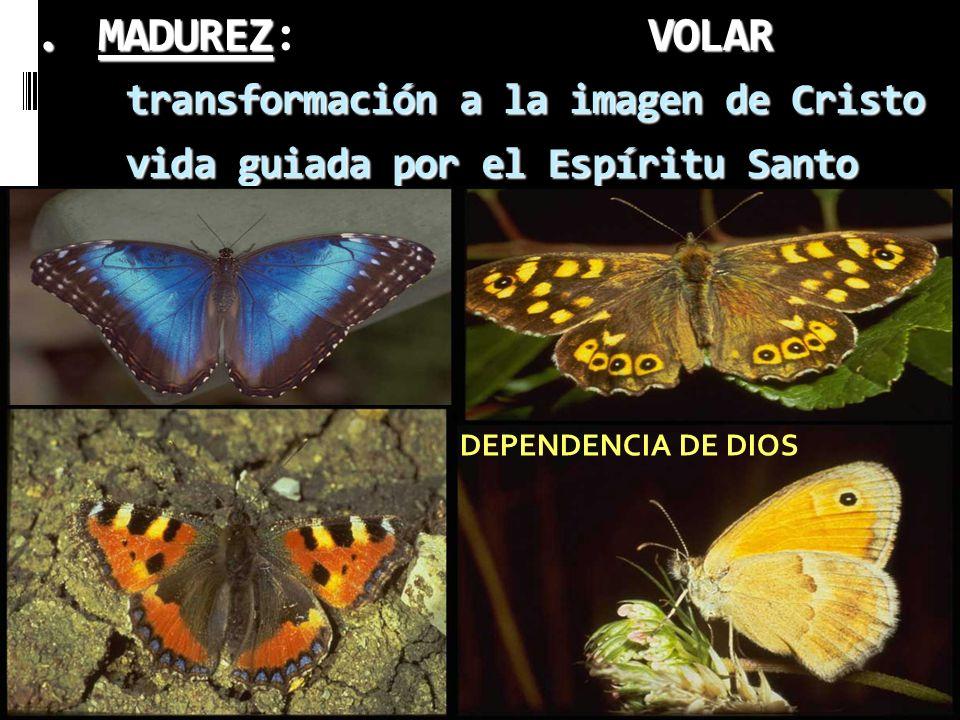 MADUREZ: VOLAR transformación a la imagen de Cristo vida guiada por el Espíritu Santo