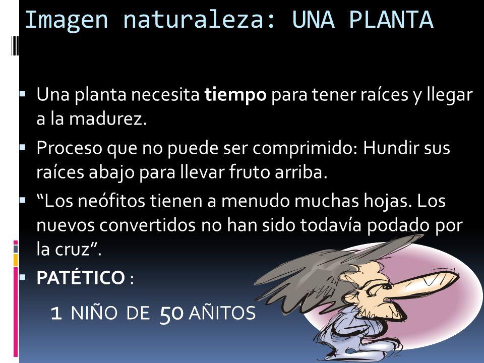 Imagen naturaleza: UNA PLANTA