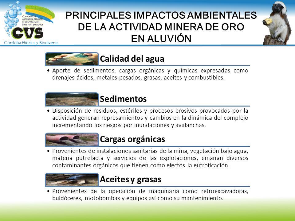 PRINCIPALES IMPACTOS AMBIENTALES DE LA ACTIVIDAD MINERA DE ORO EN ALUVIÓN