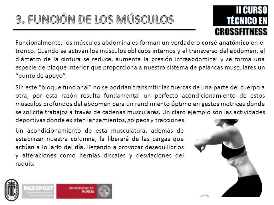 3. FUNCIÓN DE LOS MÚSCULOS
