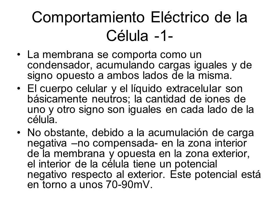 Comportamiento Eléctrico de la Célula -1-