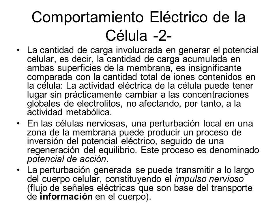Comportamiento Eléctrico de la Célula -2-