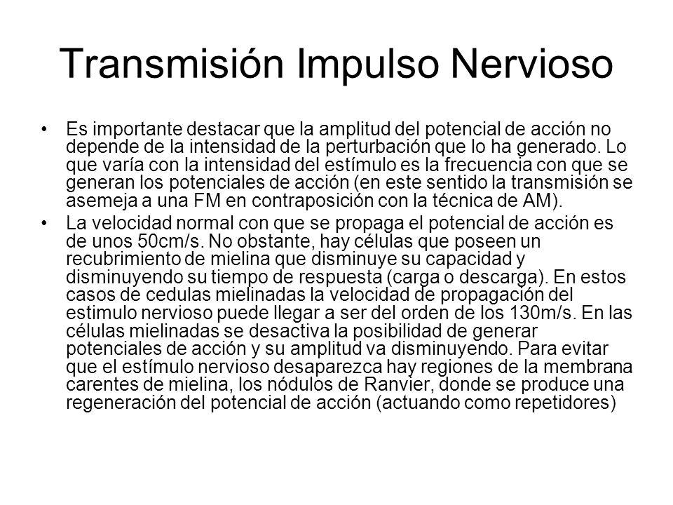 Transmisión Impulso Nervioso