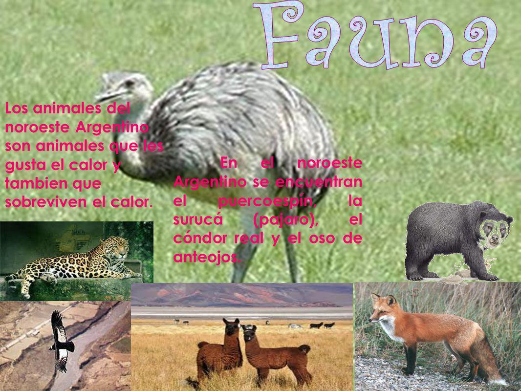 Fauna Los animales del noroeste Argentino son animales que les gusta el calor y tambien que sobreviven el calor.