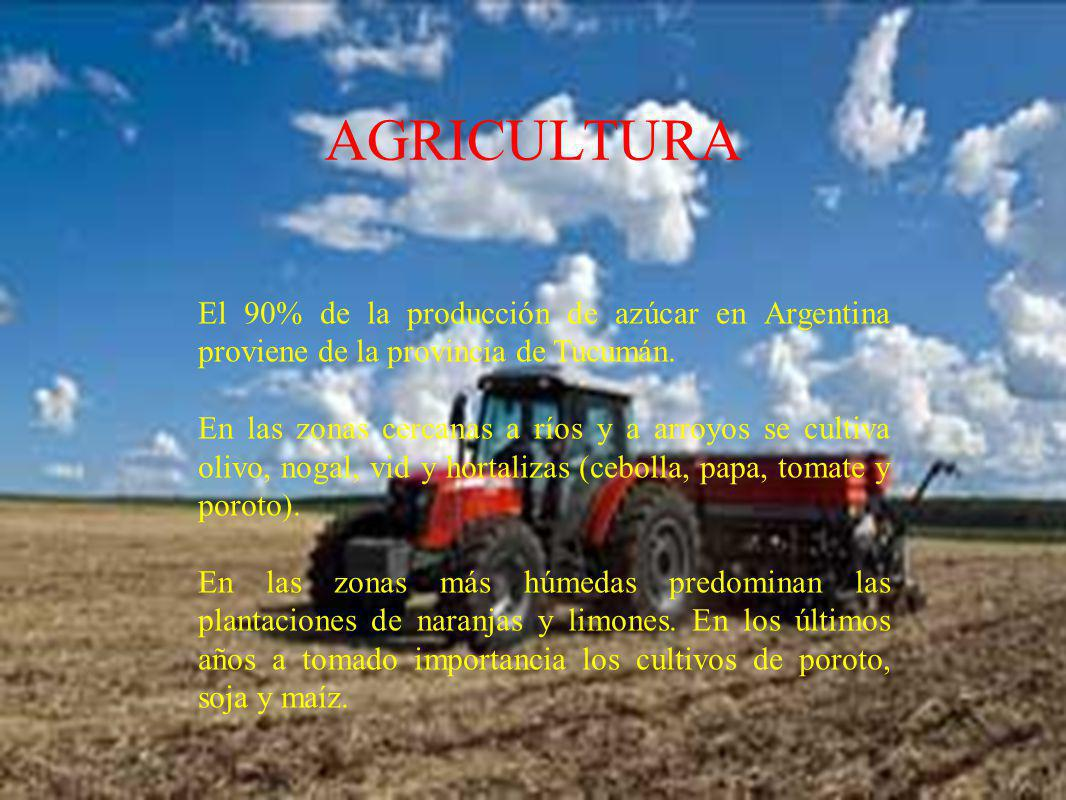 AGRICULTURA El 90% de la producción de azúcar en Argentina proviene de la provincia de Tucumán.