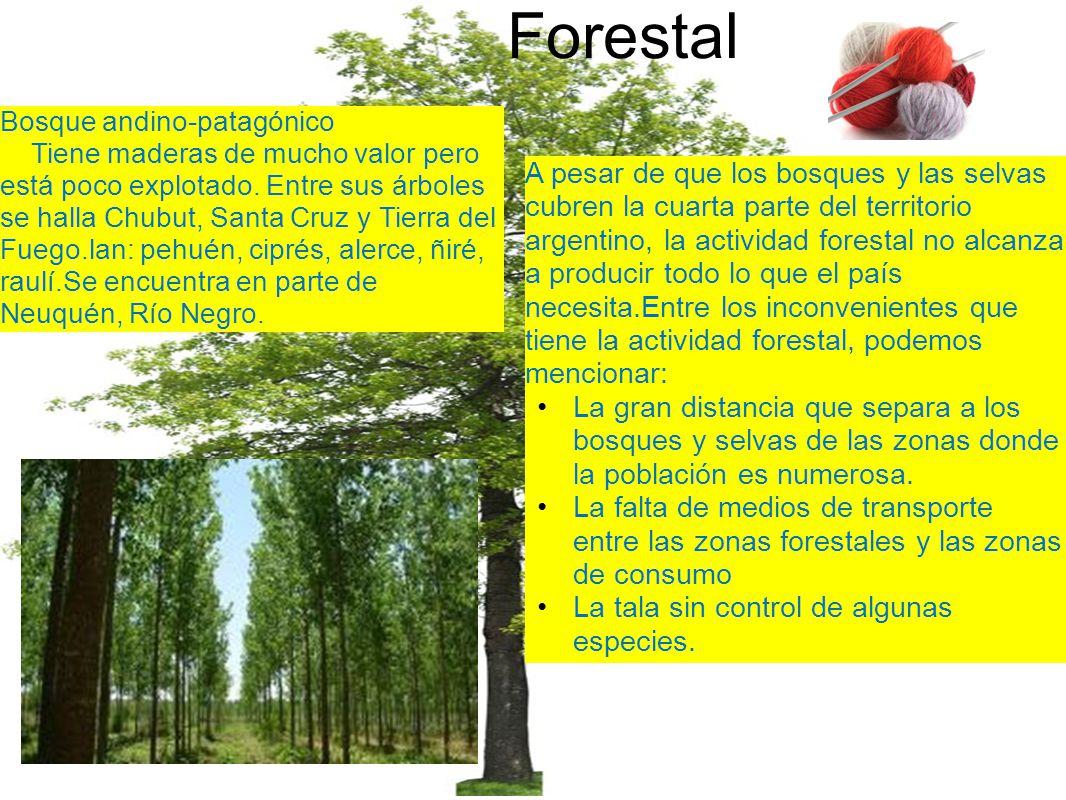 Forestal Bosque andino-patagónico.