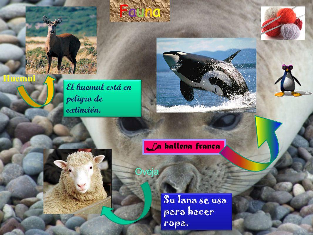 Fauna Huemul El huemul está en peligro de extinción. La ballena franca