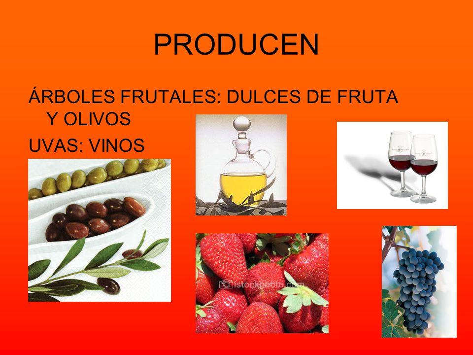 PRODUCEN ÁRBOLES FRUTALES: DULCES DE FRUTA Y OLIVOS UVAS: VINOS