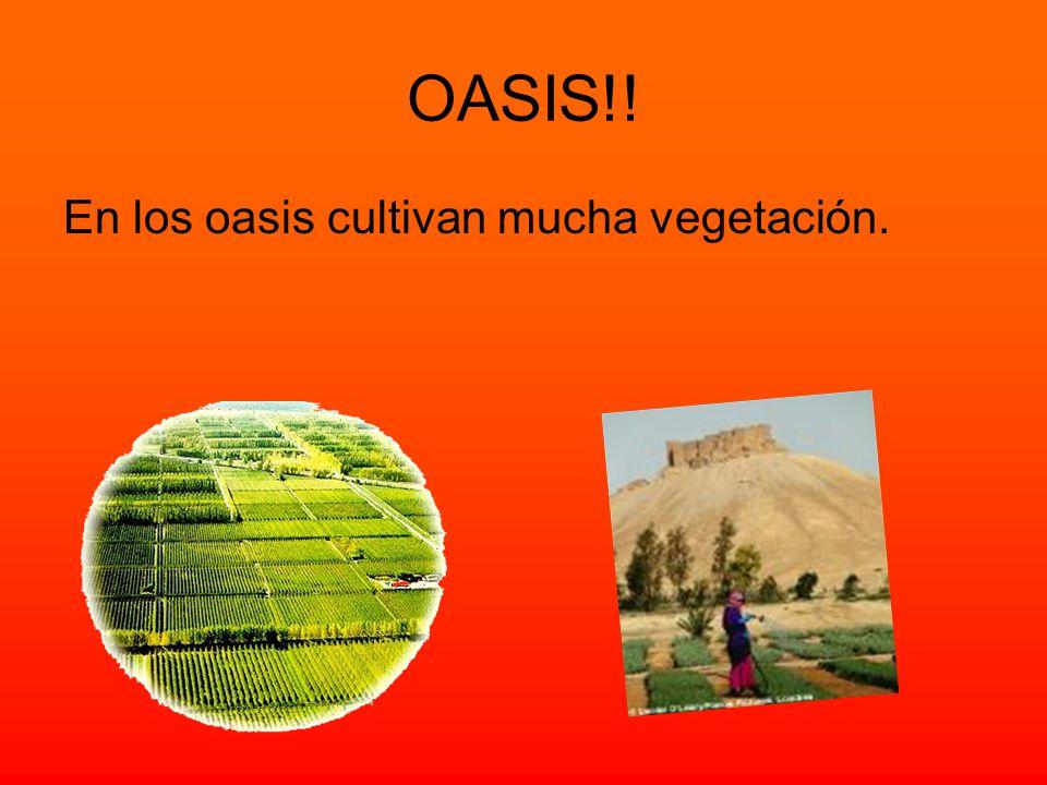 OASIS!! En los oasis cultivan mucha vegetación.