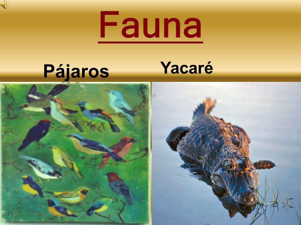 Fauna Yacaré Pájaros