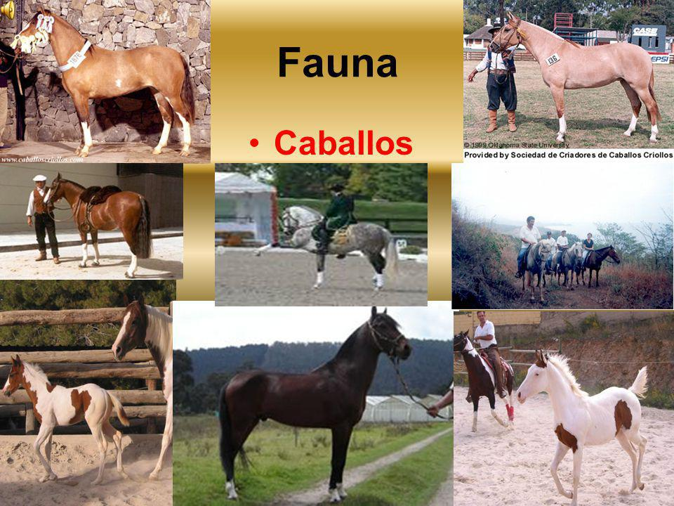 Fauna Caballos