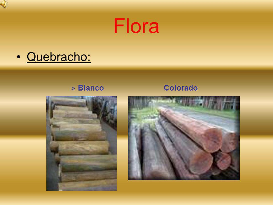 Flora Quebracho: Blanco Colorado