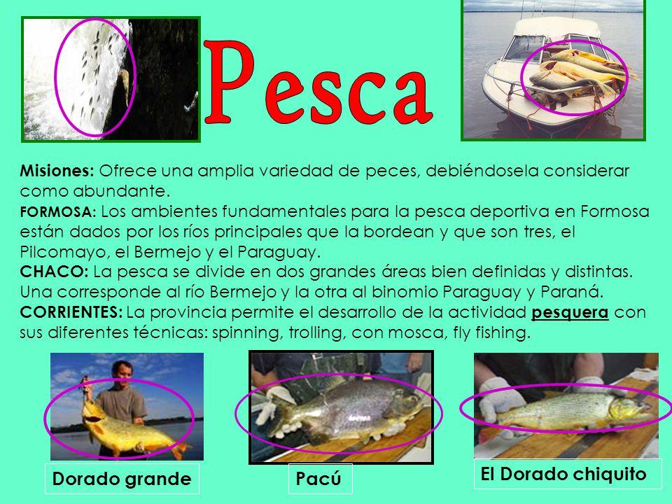 Pesca El Dorado chiquito Dorado grande Pacú