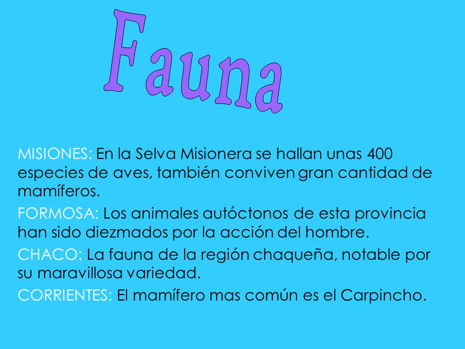 Fauna MISIONES: En la Selva Misionera se hallan unas 400 especies de aves, también conviven gran cantidad de mamíferos.