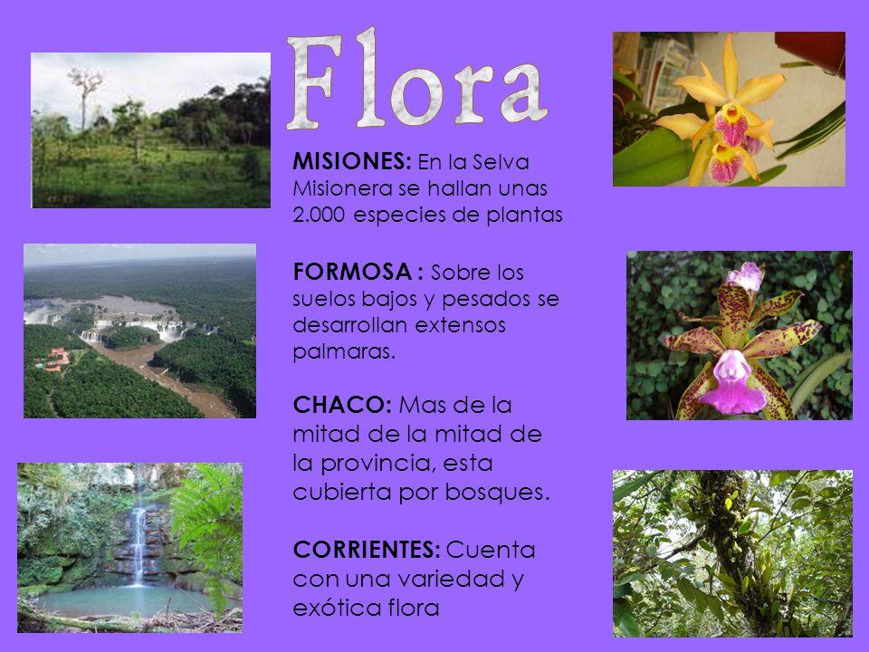 Flora MISIONES: En la Selva Misionera se hallan unas 2.000 especies de plantas.