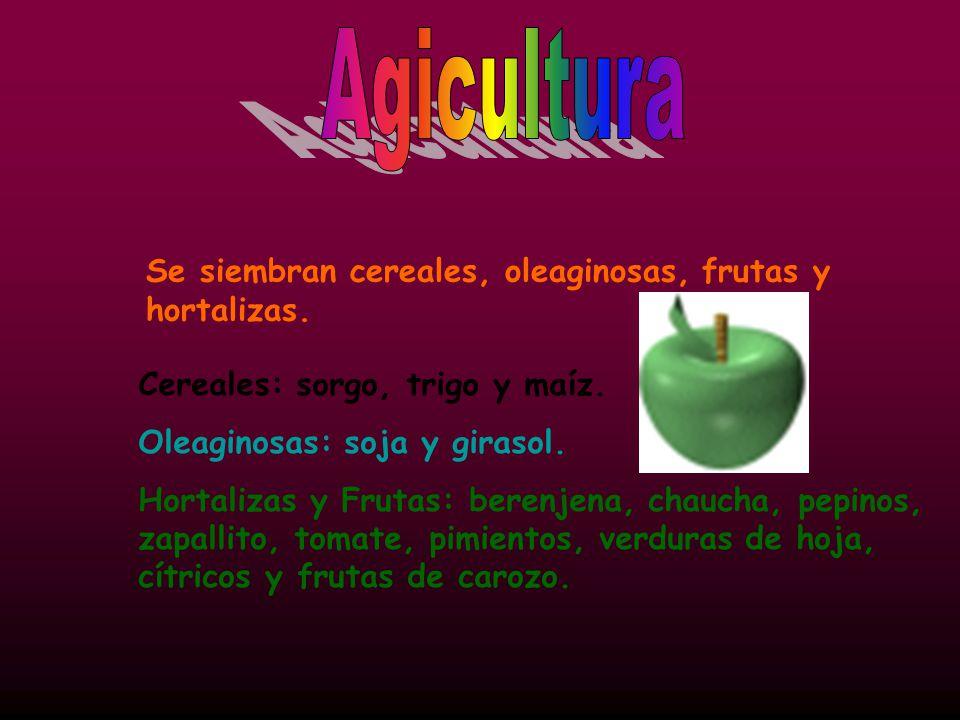 Agicultura Se siembran cereales, oleaginosas, frutas y hortalizas.