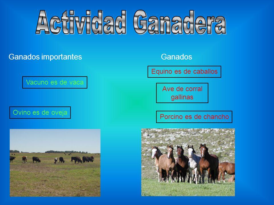 Actividad Ganadera Ganados importantes Ganados Equino es de caballos