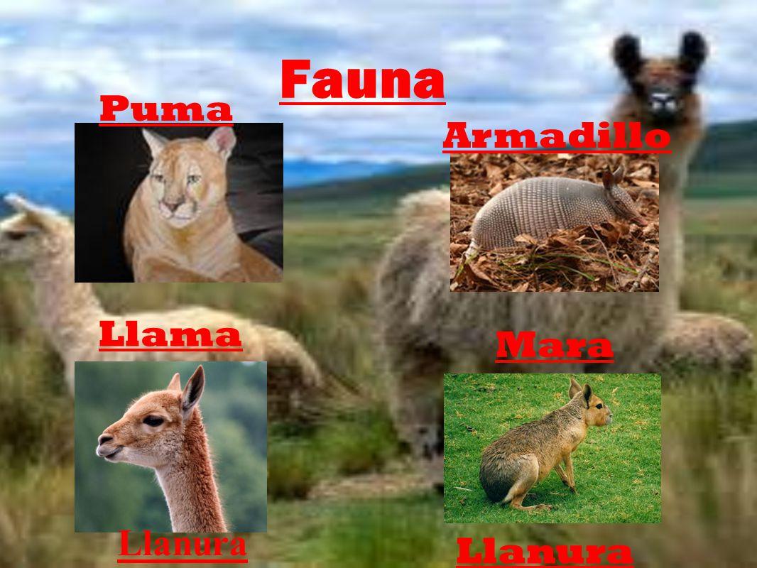 Fauna Puma Armadillo Llama Mara Llanura Llanura