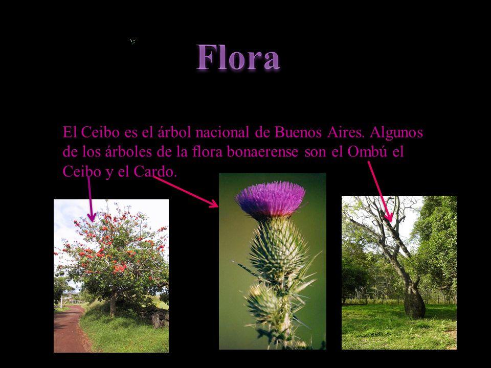 Flora El Ceibo es el árbol nacional de Buenos Aires.