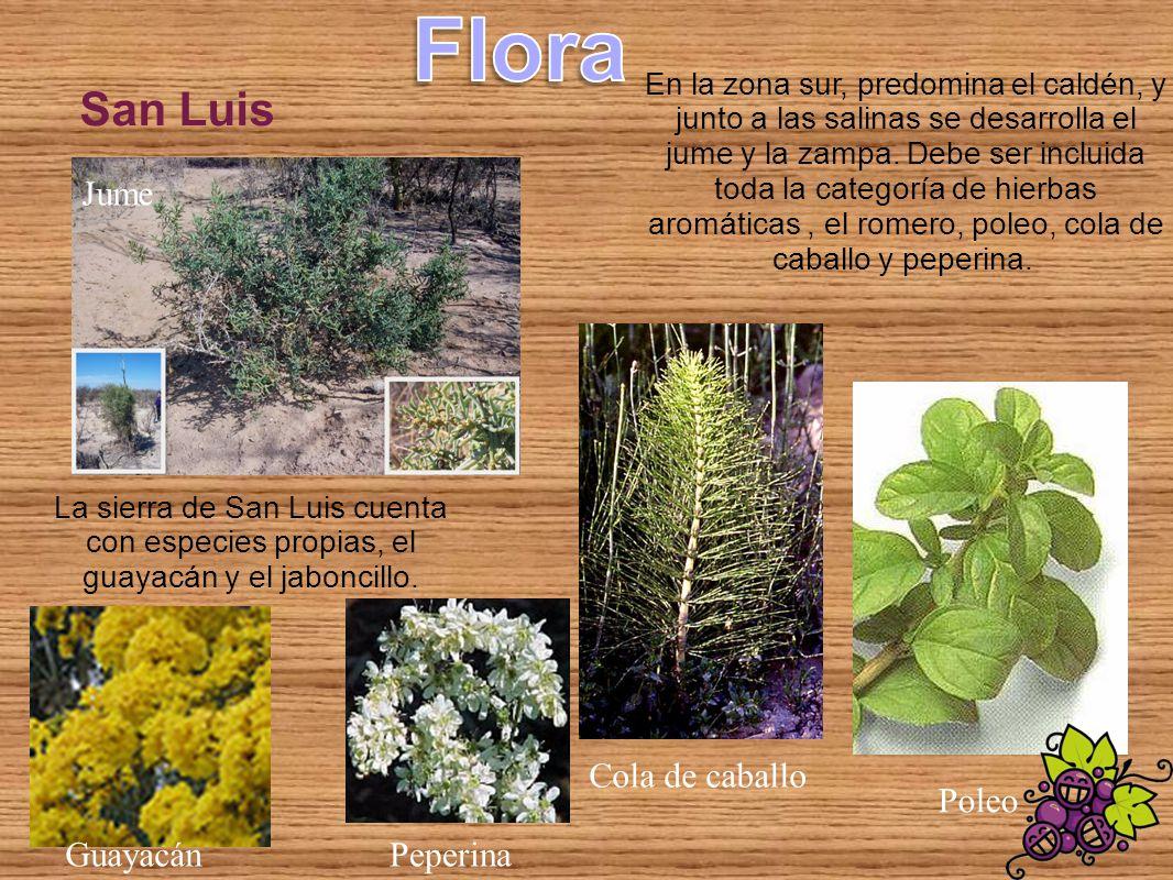 Flora San Luis Jume Cola de caballo Poleo Guayacán Peperina