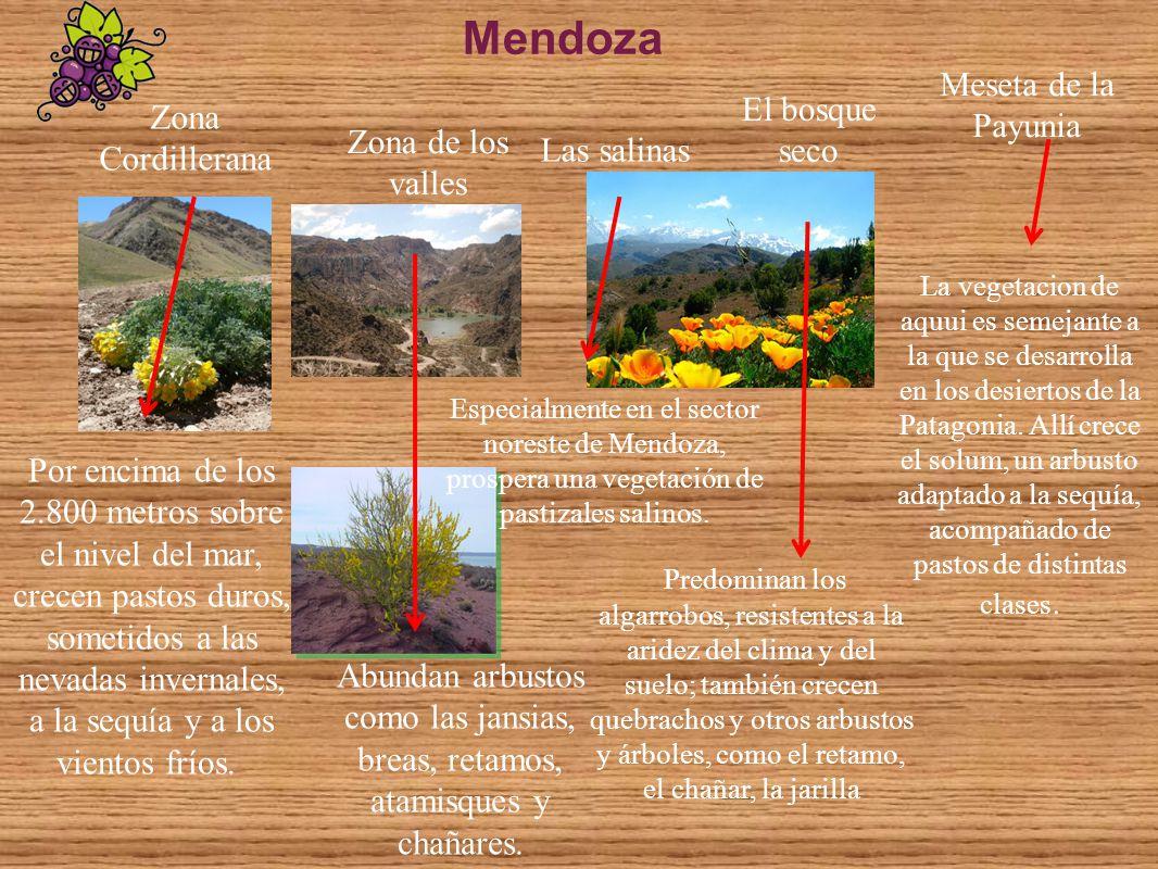 Mendoza Meseta de la Payunia El bosque seco Zona Cordillerana