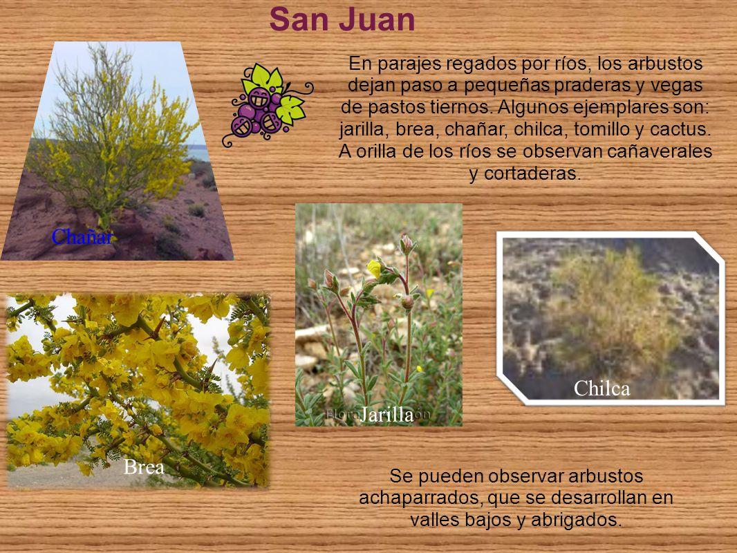 San Juan Chañar Chilca Jarilla Brea