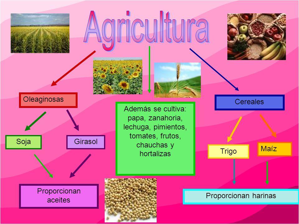 Agricultura Oleaginosas Cereales