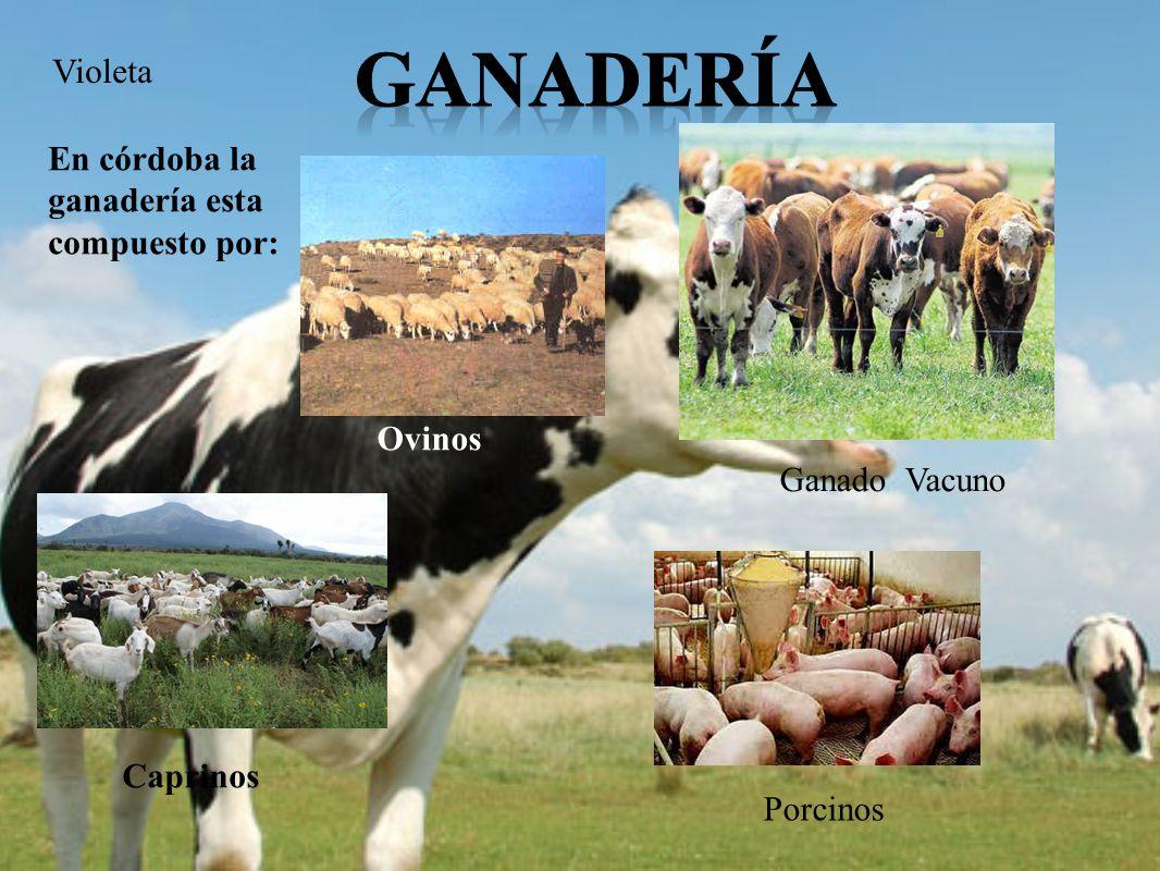 Ganadería Violeta En córdoba la ganadería esta compuesto por: Ovinos