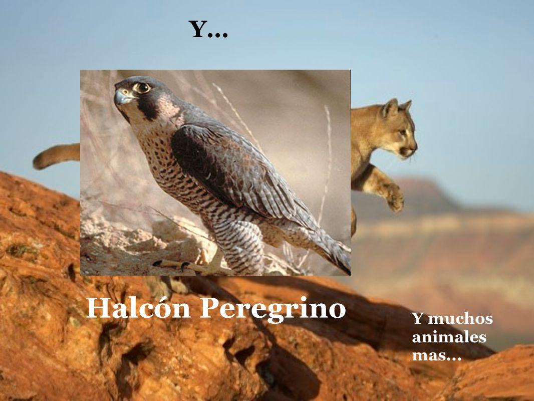 Y... Halcón Peregrino Y muchos animales mas...