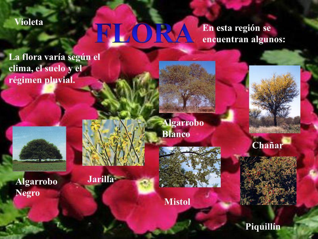 FLORA Violeta En esta región se encuentran algunos: