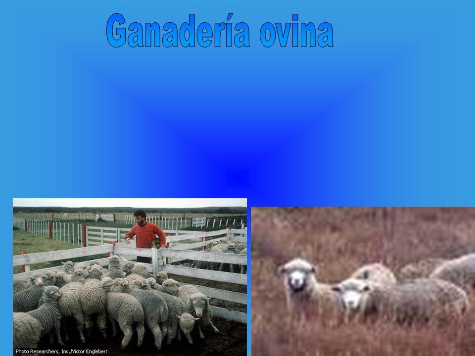 Ganadería ovina