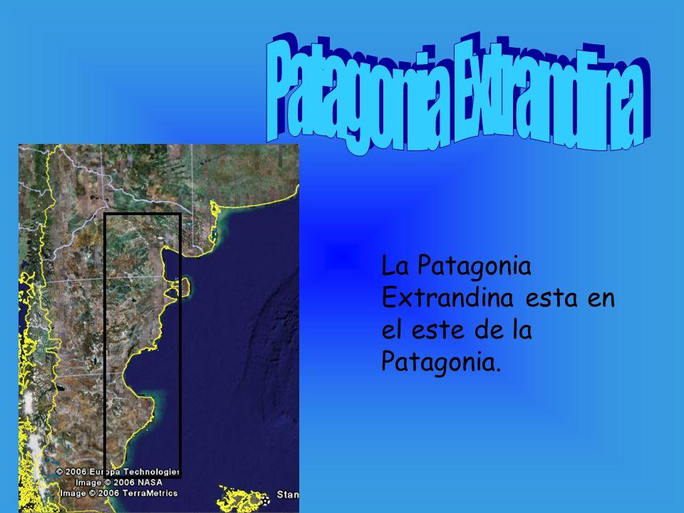 Patagonia Extrandina La Patagonia Extrandina esta en el este de la Patagonia.