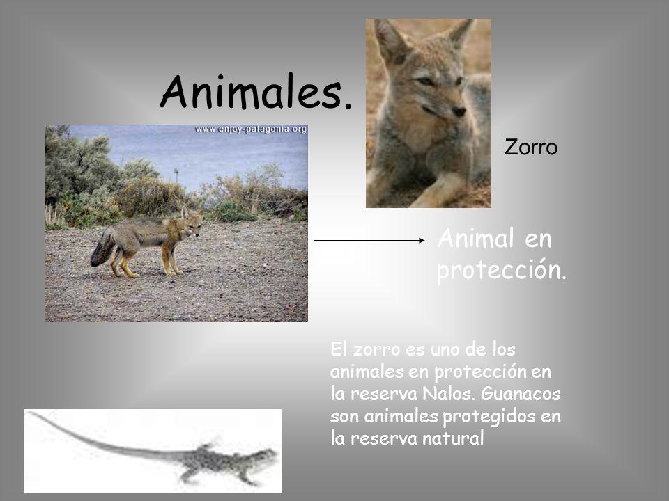 Animales. Animal en protección. Zorro